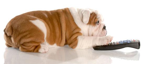 dogwatchingtv.jpg