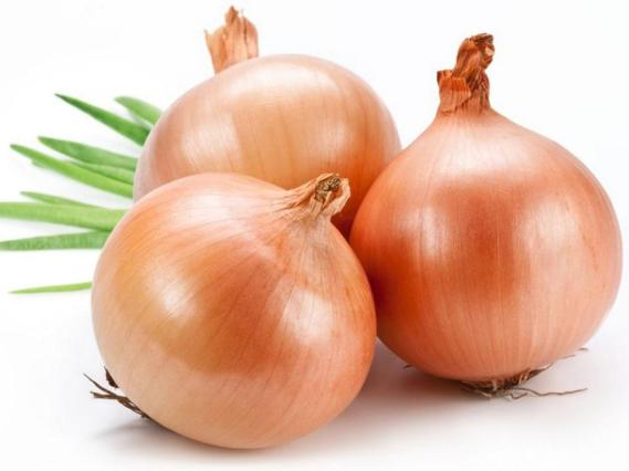 onion-04.jpg